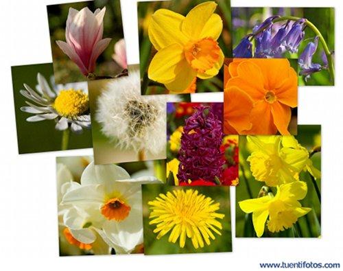 Objetos de Collage De Flores