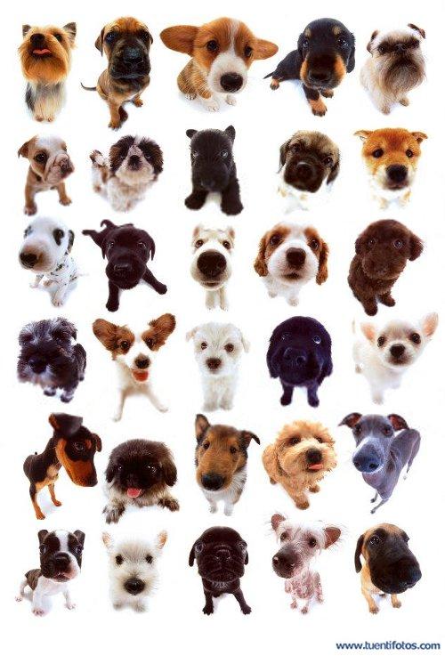 Animales de Perritos