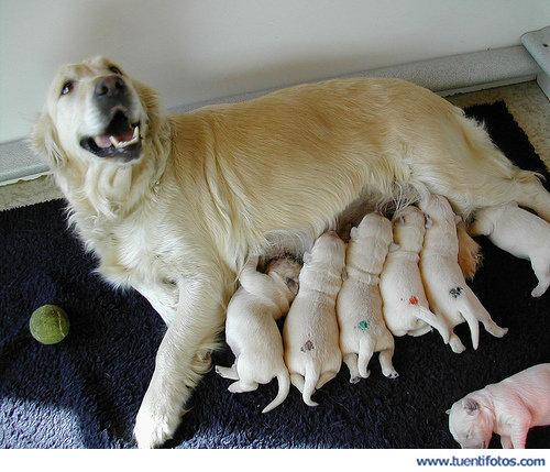 Animales de Perritos Mamando