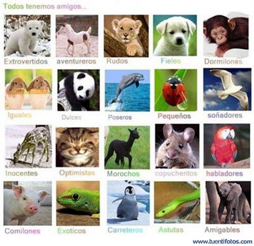 Animales de Todos Tenemos Amigos Animales