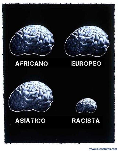 Frases de Cerebro Racista