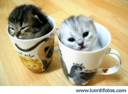 Animales de Gatitos A La Taza