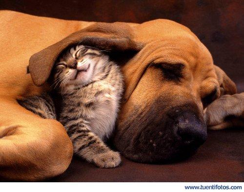 Animales de Gato Bajo La Oreja De Perro