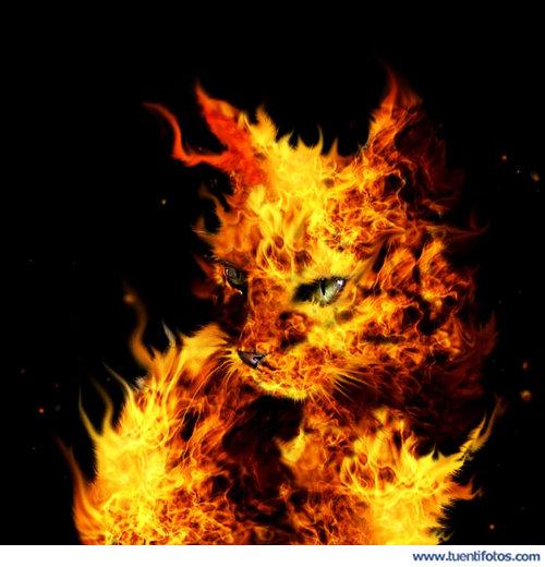Ilusiones de Gato De Fuego