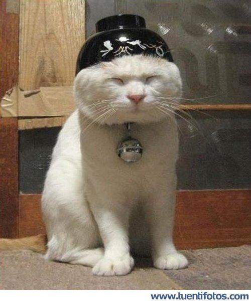 Animales de Gato Kunfu