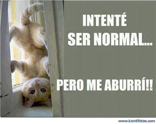 Animales de Intente Ser Normal