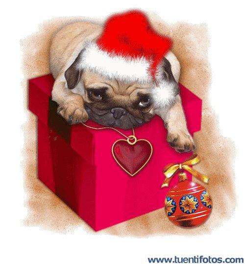 Navidad de Perrito Encima De Regalo