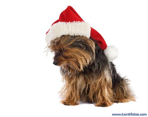 Animales de Perro Con Gorro De Navidad