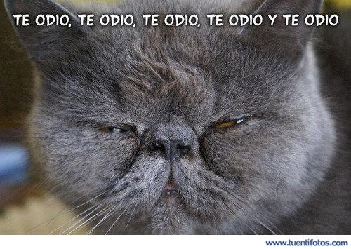 Animales de Te Odio Te Odio