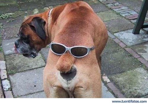 Animales de A cara de perro