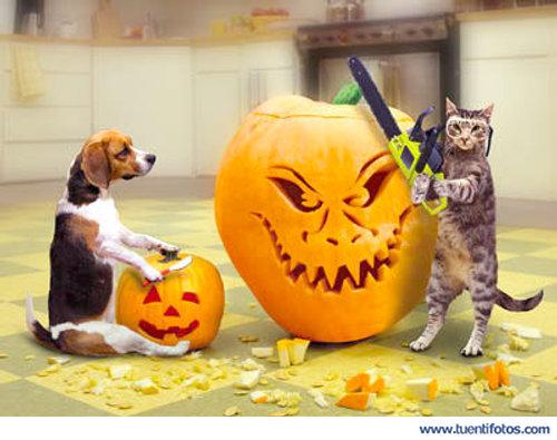 Animales de Animales Expertos En Halloween
