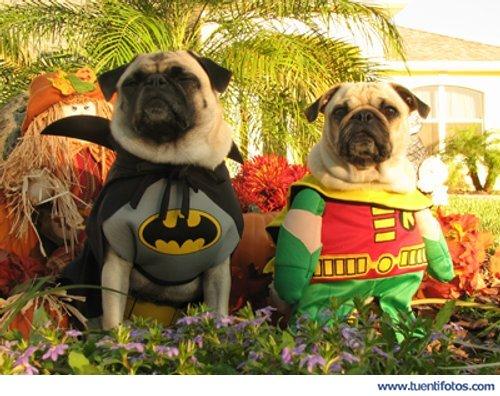 Animales de Batman Y Robin Perrunos