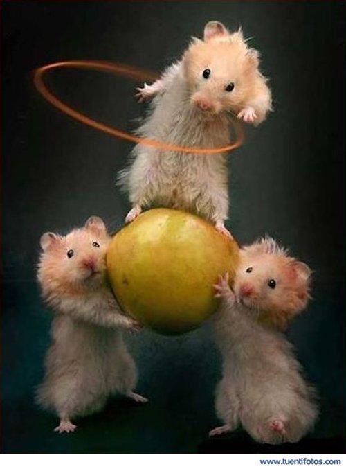 Animales de Circo De Los Ratones