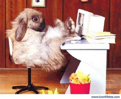 Animales de Conejo Viciado Al Tuenti