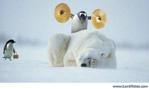 Animales de Despertando Al Oso Polar