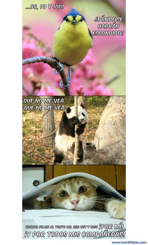 Animales de Donde Se Han Escondido