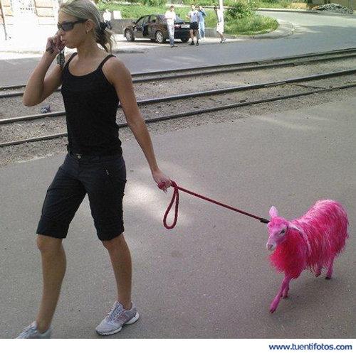 Animales de El Perro Oveja