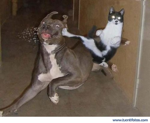 Animales de Gato Kunfu Dando Patada Voladora