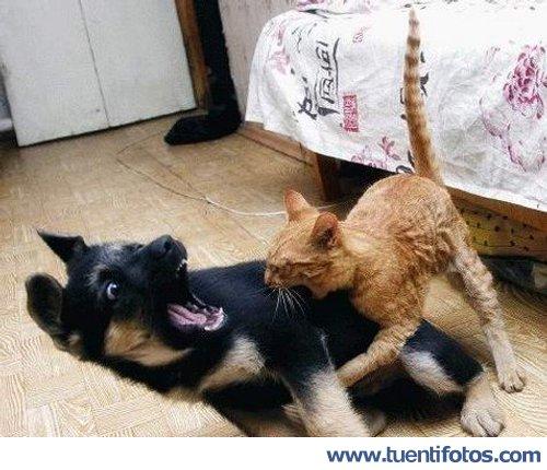 Animales de Gato Muerde A Perro