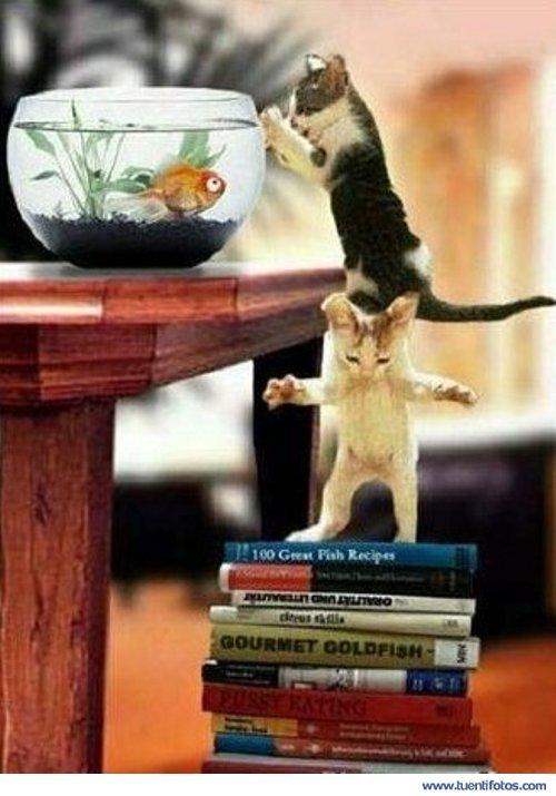 Animales de Gatos de Caza