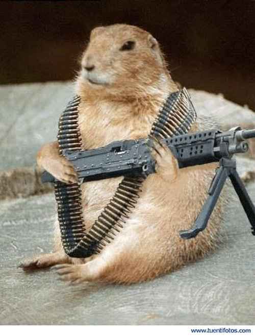 Animales de Hamster Guerrero
