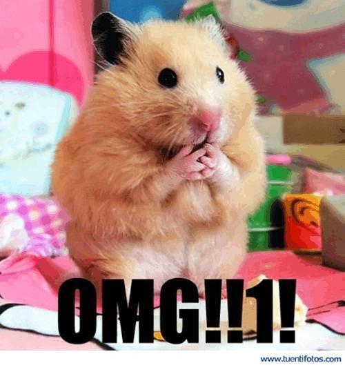 Animales de Hamster OMG
