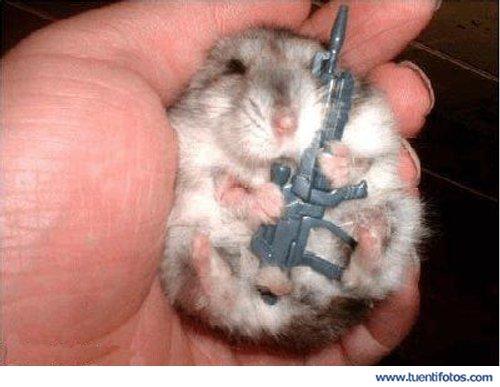 Animales de Hamster Soldado Dormilon