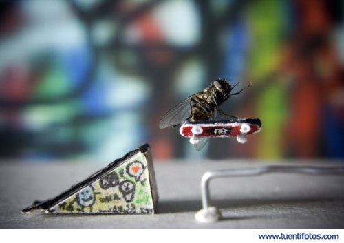 Animales de Insecto Skater