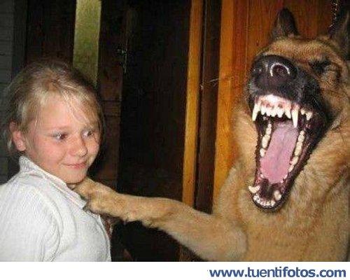 Animales de La Risa Del Perro