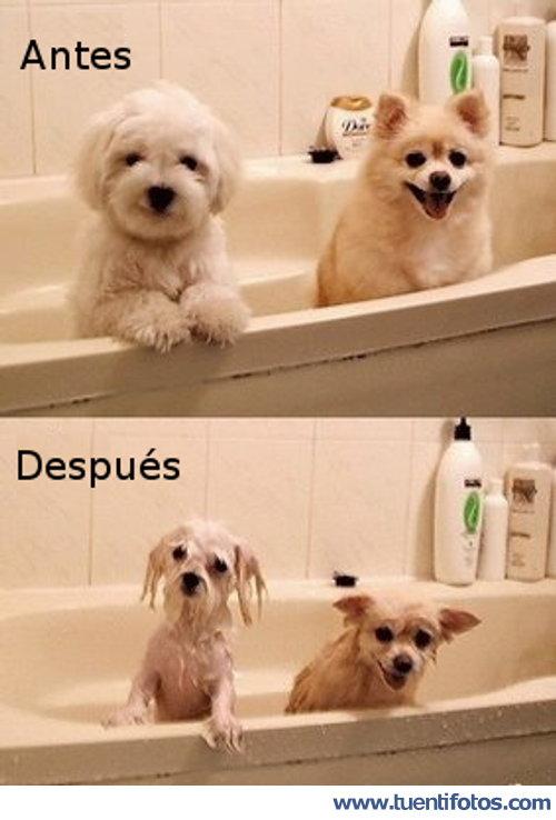 Animales de Lavando A Los Animales