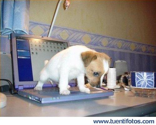 Animales de Necesidades Encima De Windows