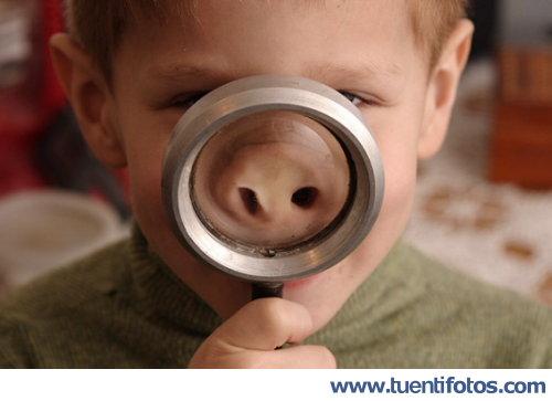 Curiosidades de Niño Cerdo