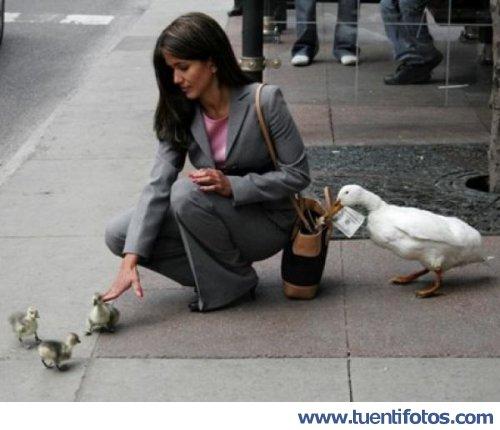 Animales de Patos Ladrones