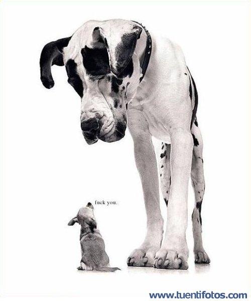 Animales de Perrito Dice Fuck You