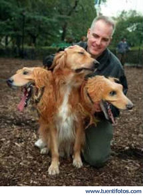 Animales de Perro De Tres Cabezas