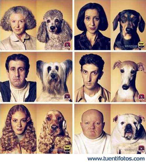 Parecidos de Perro Y Su Dueño