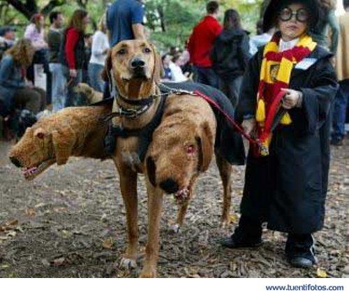 Animales de Perro Disfrazado de Perros