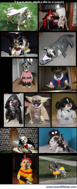 Animales de Perros Disfrazados