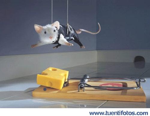 Animales de Ratón En Misión Imposible