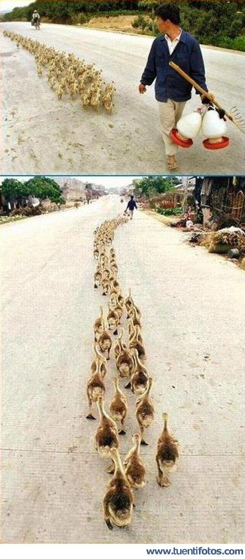 Animales de Señor De Los Patos