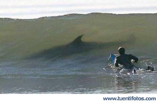 Animales de Surf Con Tiburones