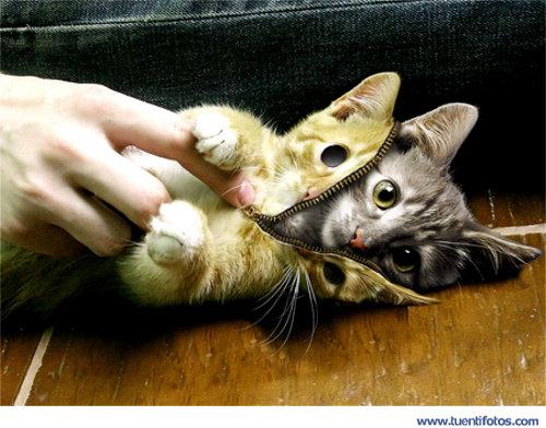 Animales de Un Gato que se Disfraza de Tal