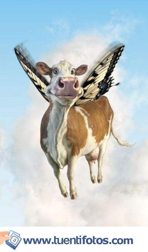 Animales de Vaca Voladora