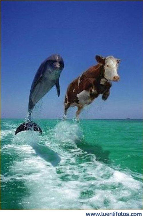 Bromas de Vaca Y Delfín