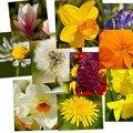 Miniatura de Collage De Flores