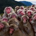 Miniatura de Grupo De Monos