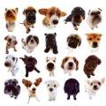Miniatura de Perritos