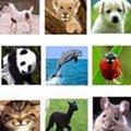 Miniatura de Todos Tenemos Amigos Animales