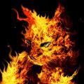 Miniatura de Gato De Fuego