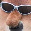 Miniatura de A cara de perro